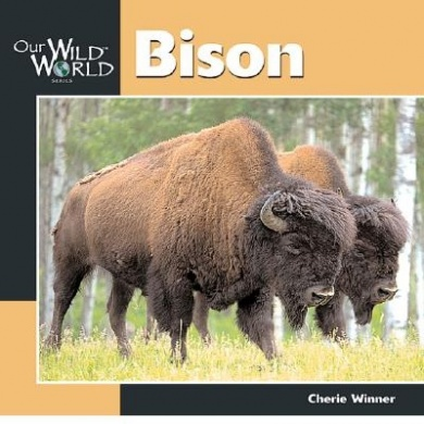 Bison (Our Wild World)
