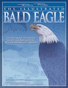 Illustrated Bald Eagle