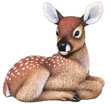 Roughout Whitetail Fawn