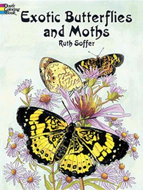 Exotic Butterflies and Moths